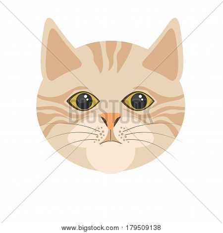 Burmilla cat in light color portrait in flat design on white. Isolated head of domestic animal with stripes, human-shaped eyes, triangular ears and black whiskers vector colorful illustration