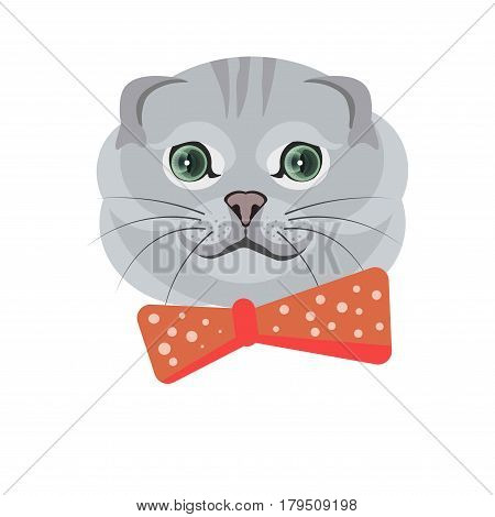 Scottish fold breed of cat in grey color isolated on white. Vector illustration in flat design of fluffy domestic animal with green eyes and red spotty tie on neck. Smiling kitten with bent ears i