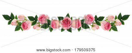 Pink rose flowers and buds line arrangement isolated on white. Flat lay top view.
