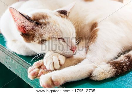 The cat is sleeping. Portrait of a sleeping cat largly. Cat resting. Cat gray fluffy