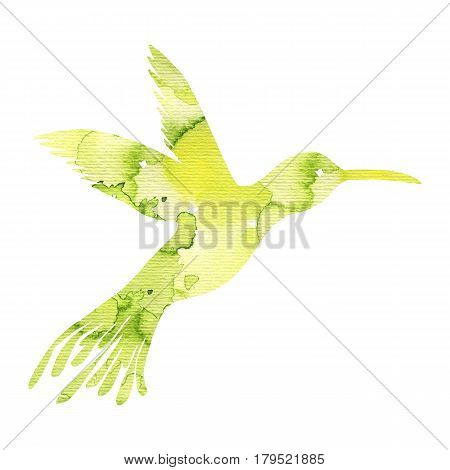 watercolor green hummingbird silhouette, hand drawn songbird, isolated painting element