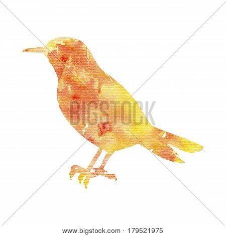 watercolor bird silhouette, hand drawn songbird, isolated painting element