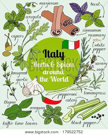 Vector set of hand drawn Italian herbs and spices. Set of herbs and spices for design menu, banner and label. Colored illustration of spice and herb. Spices and herbs used in Italy for cooking.