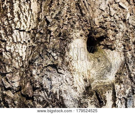 natural background texture of a tree trunk