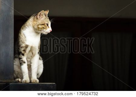 Wild domestic cat standing on the concrete fence. The cat has yellow eyes and black and gray stripes pattern on its body hairs. poster