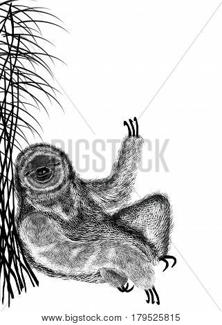 Illustration of black textured silhouette of sloth that sits under bush reed. Isolated on white background.
