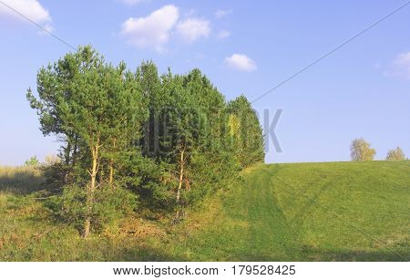 Autumn landscape with pines on the hill