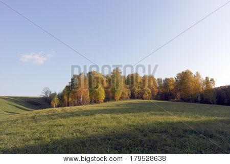 Beautiful autumn landscape with birches on the hill