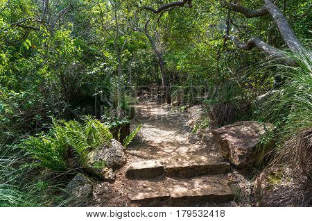 Hiking Path With Stone Stairs In Tropical Rainforest