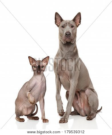 Cat And Dog In Front Of White Background