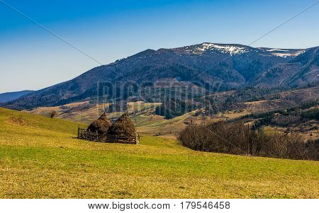 agricultural field on a hillside with haystacks on a green grassy meadow. beautiful springtime morning in mountains