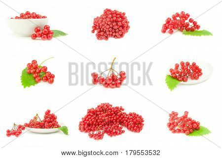 Collage of viburnum berries  close-up isolated on white background