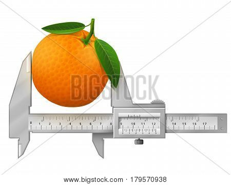 Horizontal caliper measures orange fruit. Concept of orange with leaves and measuring tool. Qualitative vector illustration for fruits agriculture cooking farming gastronomy gardening etc