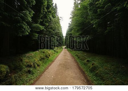 Road in the forest, Perthshire, Scottish Highlands