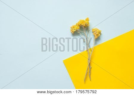 Twigs Of Dried Immortelle On A Pastel Background