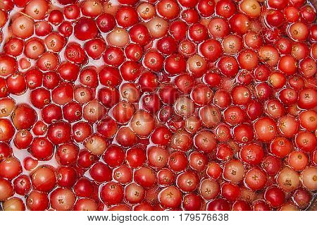 Lingon berries at farmers market. TILEABLE Seamless Red Cranberry Fruit Background