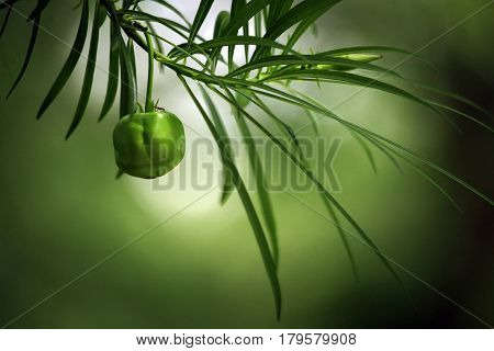 Bright green leaves with fruit close up