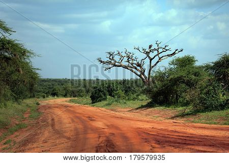 Red road Park Tsavo East National in Kenya