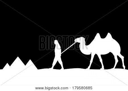 Man with camel of the pyramids. Vector illustration.