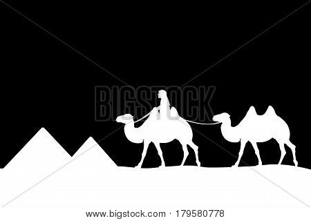 Man on the camel of the pyramids. Vector illustration.