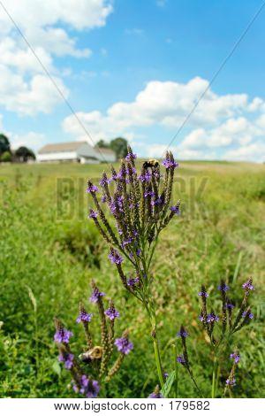 Countryside Wildflowers