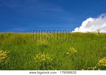 Field of flowers is at the level of the clouds. Mountainous land on a summer day. Pastoral panorama of nature summer - beautiful  lawn landscape.