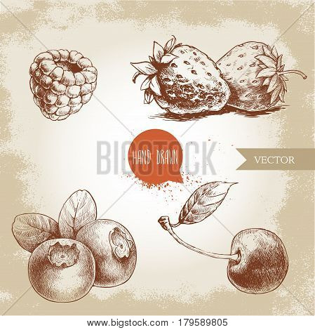 Hand drawn sketch style berries set. Raspberry strawberry cherry and blueberry. Healthy fruit and berry vector illustration.