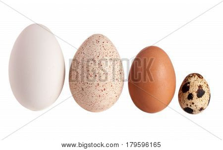 Goose turkey chicken and quail eggs isolated on white background. clipping path.