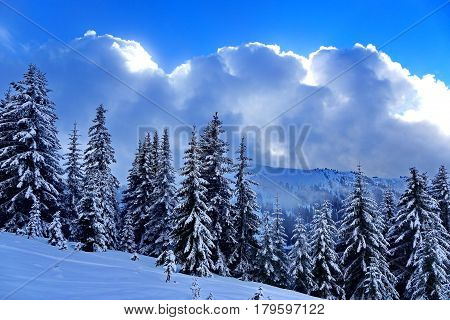 Snowy fir trees against the background of mountains and clouds. Picturesque and gorgeous wintry scene. Subpolar Urals, Russia