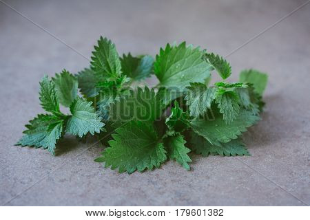 Young nettle leaves on rustic background, stinging nettles, urtica