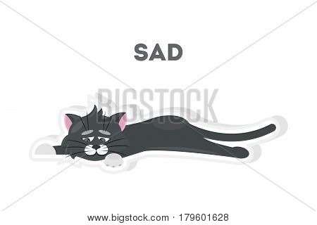 Isolated sad cat on white background. Cute sticker.