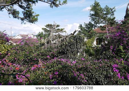 The most known place of interest of the city of Da Lat in Vietnam is Crazy House