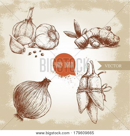 Hand drawn sketch style illustration of different spices. Garlics with cloves and black peppers ginger root onion and jalapeno peppers.
