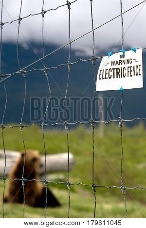 Bear Behind Electric Fence