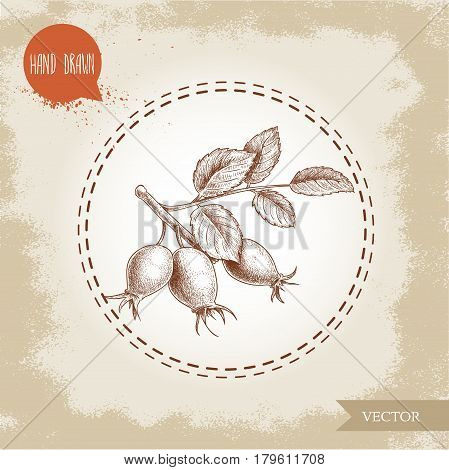Hand drawn sketch style rose hips branch with berries and leafs. Health vector vintage illustration.
