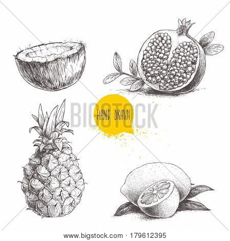 Hand drawn sketch style tropical fruits set isolated on white background. Slice of lemon with leaf half of coconut pineapple and half of pomegranate. Eco food illustration.