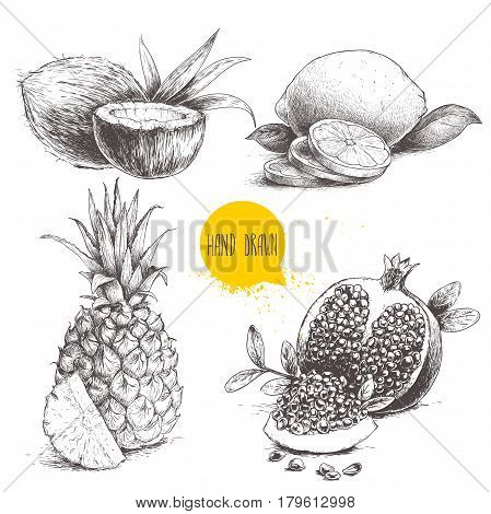 Hand drawn sketch style tropical fruits set isolated on white background. Slice of lemon with leaf half of coconut pineapple and pomegranates with seeds. Tropic food drawing.