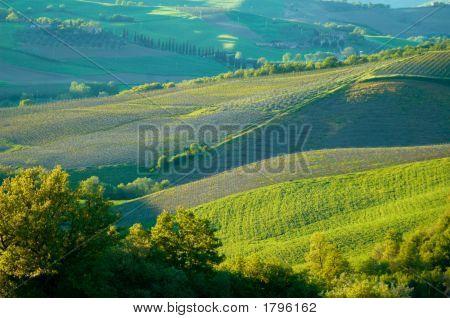 Fields In Italy