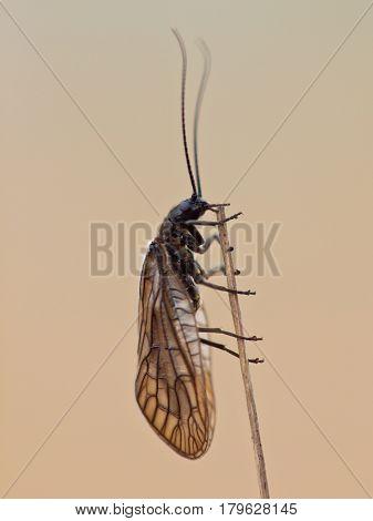 Brown Bug On Twig