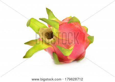 Hylocereus undatus isolated on a white background with clipping path
