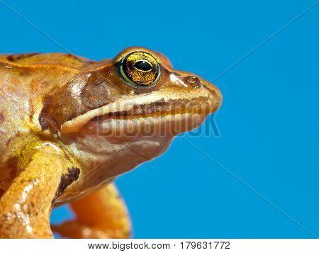 Frog Head Against Sky
