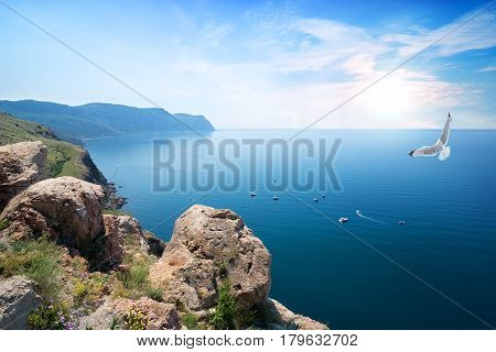 White gull flying over the Black Sea