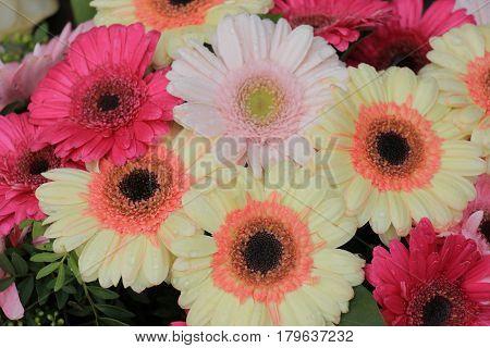 Big pastel gerbers in a flora wedding decoration