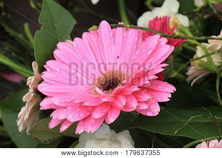 Big pink gerber in a flora wedding decoration