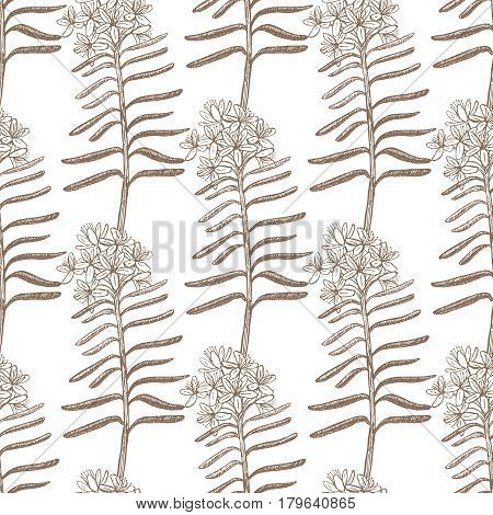 vector hand drawn light background with wild rosemary