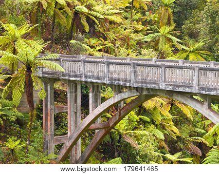 Lonely Jungle Bridge