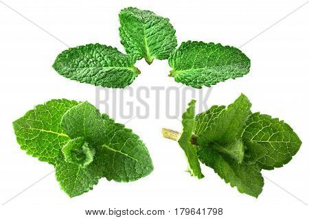 Isolated collection of fresh peppermint on white