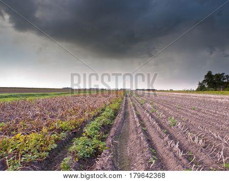 Harvested Field Under Brooding Sky