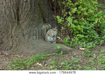 squirrel on tree with leaves in the park