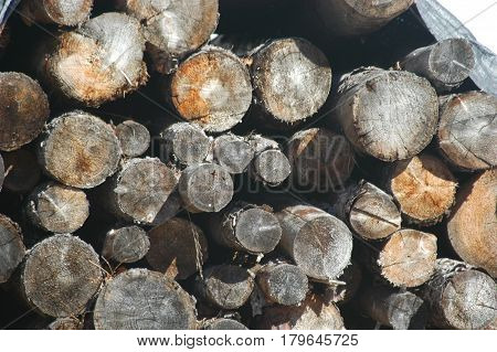 wood pile  grey  brown trees logs  bush